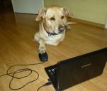 Psia niania