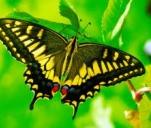 Motyle mazurskich łąk