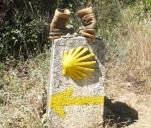 Udrożnij nam drogę. Hiszpańskie camino de Santiago