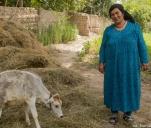 COW-funding: krowa dla Tadżykistanu