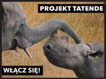 TATENDE - uratujmy słonie, żyrafy, nosorożce!