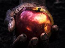 ZAŁAP SIĘ NA JABŁKOBRANIE!      Dzikie Jabłka wydają...