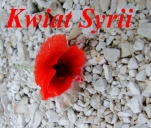 Kwiat Syrii