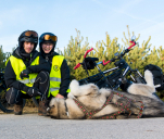 Tandemowe Trip Love - tandemem i z psem do Laponii! :)