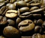 uruchomienie palarni kawy