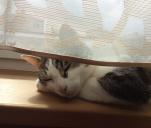 Pazurem po mapie - Kot Henryk w podróży