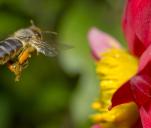 Projekt BzzzZZzzz :) czyli kultywowanie pszczelarstwa
