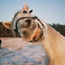 kon.bdg